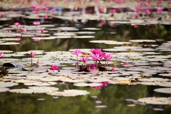 Cambodia_34
